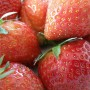 Bright Red, Fresh Strawberries with Green Stalks