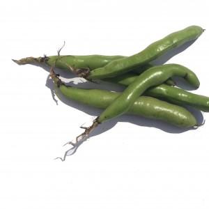 Six broad beans