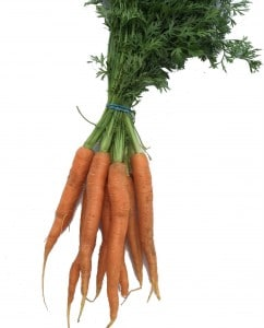 A bunch of carrots with fresh green leaves