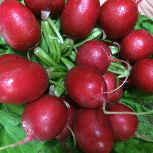 bunch of bright radish with green leaves