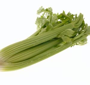 A head of Green Celery