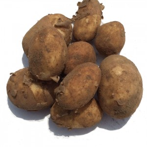 A selection of unwashed new potatoes