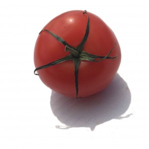 A single Red Tomato with its green stalk.