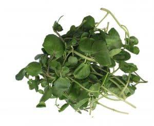 A selection of green leafy watercress