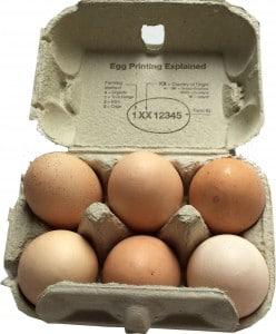 An open box of 6 Eggs