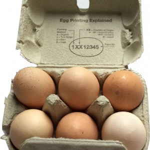 An open box of 6 Eggs