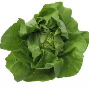 A green leafy lettuce
