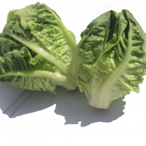 Two small Leafy Lettuces