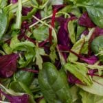 Red and green salad leaves