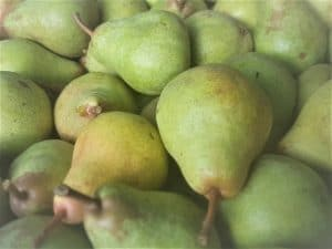 Williams Pear - a great early variety