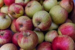 Photo of lots of cox apples