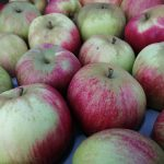 Photo of Worcester Apples